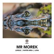 PREMIERE: Mr Morek — Jungle / Water Area / Luna — DAR LABEL, [Teasers]